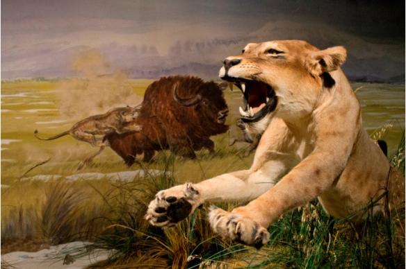 Le lion des cavernes à la chasse.